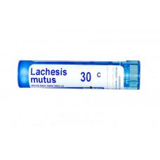 Лахезис мутус Boiron, Single Remedies  30C, прибл. 80 гранул